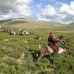 Sanjim, a nomadic reindeer herder, tends to his flock in Mongolia's far north near Siberia.