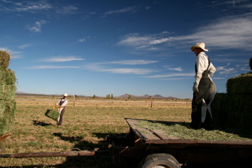 A Mennonite father and son at work in a field near Casas Grandes, Chihuahua.