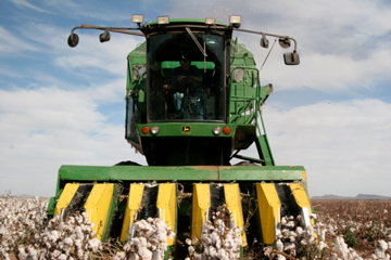 A man drives a cotton harvester on a Mennonite farm near Lopez Mateos, Chihuahua.